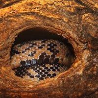 Змея в дупле. :: Штрек Надежда