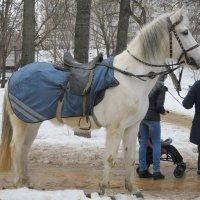 Белая лошадь :: Дмитрий Никитин