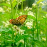 про бурых бабочек 3 :: Александр Прокудин