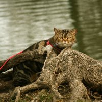 Любопытный кот. :: barsuk lesnoi