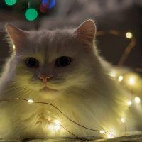 праздник каждый день :: Олеся Семенова