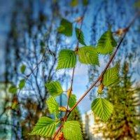 В ожидании весны... :: Леонид Абросимов