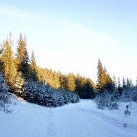 Зимний лес в объятьях тишины задремал, укутав ветки снегом.... :: Анна Суханова