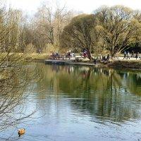 Весенний день в Ботаническом саду :: Лидия Бусурина