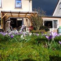 Весна, наслаждаясь солнцем :: Heinz Thorns