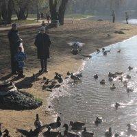 Много голубей и уток :: Дмитрий Никитин