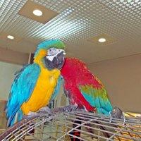 Попугаи АРА :: Лариса