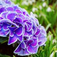 фиолетовое настроение :: Анастасия Софронова