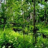 В берёзовом лесу :: Самохвалова Зинаида