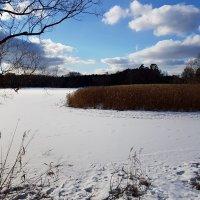 Весеннее яркое небо на зимнюю землю глядит... :: Ольга Русанова (olg-rusanowa2010)