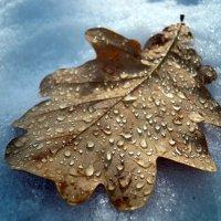 И от дыхания весны осенний лист оттаял.... :: Анна Суханова
