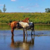 Лошадки на реке Чепца :: Владимир Максимов