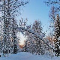 зимнмй лес :: Александр Рождественский
