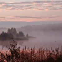 Туман на озере :: Aida10