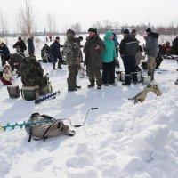 Обсуждение рыбалки... :: Александр Широнин