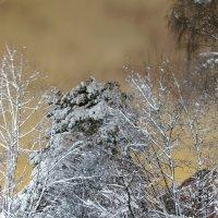 Снег... :: Ирина