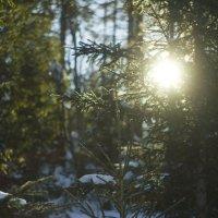 Солнце в лесу :: Алексей Екимовских