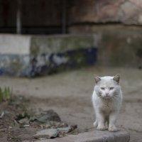 Уставший кот :: Александр Кузьмин