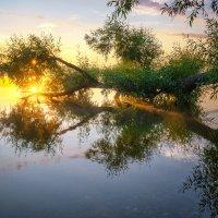 Лучики солнца :: Наталия Горюнова