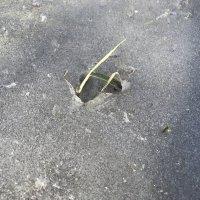 Земельно-кристальный росток утренней весны :: Наталья Звонова