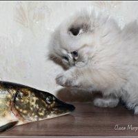 Ты кто??? :: Ольга Митрофанова