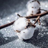 Приближение весны :: Julia Volkova