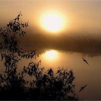Туман и солнце :: Геннадий Худолеев