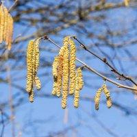 весенние цветы IMG_2742-8 :: Олег Петрушин