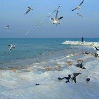 Балтийские чайки и голуби :: Сергей Карачин