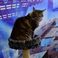 Кот :: dindin