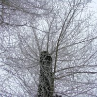 Геометрия ветвей :: Марина Таврова