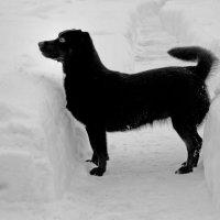 Ширина дорожки между сугробами определяется величиной, равной одной собаке средних размеров! ;)) :: Марина Яковлева