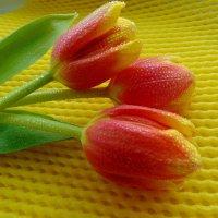 Тюльпаны. :: nadyasilyuk Вознюк