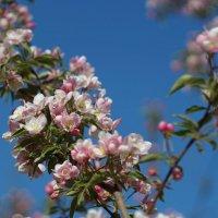 Красочная весна :: Анна Васильева (Anna-82V)