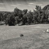 Старая уютная полянка. :: Андрий Майковский
