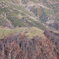 в горах Абхазии :: Олег Кручинин