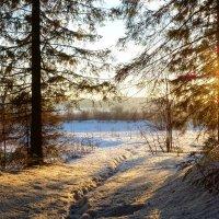 Рассвет в уральском лесу :: Алексей Сметкин