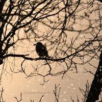 На закате :: Светлана Карнаух