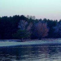 лес :: Анастасия Литвиненко
