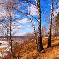 Прощай, зима! :: владимир тимошенко