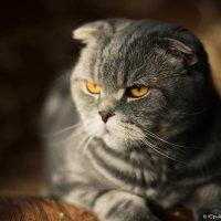 Кошка Сима. :: Юрий Фёдоров