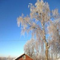 Ясный морозный денёк. :: Михаил Попов