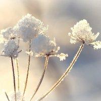 Морозный день :: Swetlana V