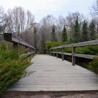 Мост в японском саду. :: Oleg4618 Шутченко