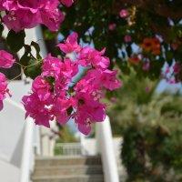 Греция, остров Крит. Отель Christiana Beach :: Ольга Кирсанова