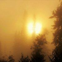 Туманный восход :: Сергей Чиняев