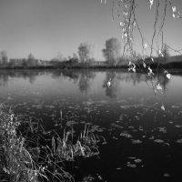 Старица реки Москва :: Александр