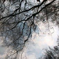 Весенние отражения :: Ирина Румянцева
