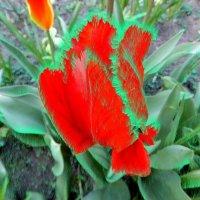 тюльпан :: tina kulikowa