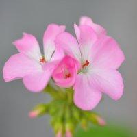 Цветы :: Лето Теплое